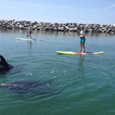 10 Beaches to Visit in Laguna Beach