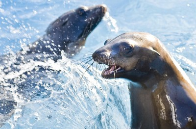 Free Things To DO In Orange County With Seals