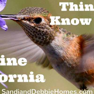 7 Things to Know About Living in Irvine