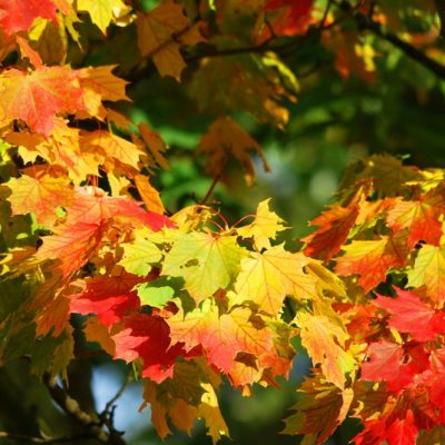 5 Things to Know About Selling your Home in the Fall